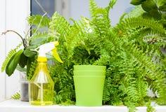 植物和喷雾器在窗台 免版税图库摄影