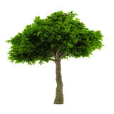 被隔绝的异乎寻常的树。 免版税库存图片