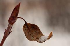 Макрос снега лист придавая форму чашки Стоковая Фотография RF