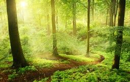 早晨在一个绿色夏天森林里 免版税库存照片