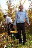 玉米收获的农夫 免版税库存图片