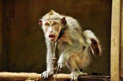 功夫猴子 库存照片