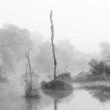 森林沼泽场面 库存照片