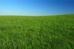поле открытое Стоковые Фотографии RF
