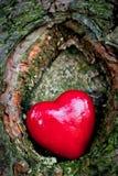 在树凹陷的红色心脏。浪漫爱 免版税库存图片