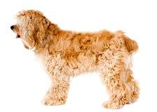профиль собаки Стоковые Изображения