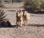 使用的狗跑和 库存图片