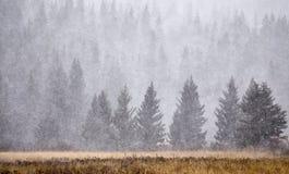 Λόφοι κυπαρισσιών το χειμώνα Στοκ Εικόνα