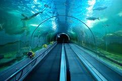 在大未经预约而来的水族馆的水下的隧道 免版税图库摄影