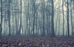 有雾的晚上在老森林里 免版税库存照片