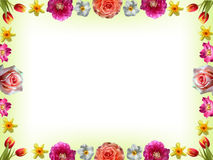 与春天花的花卉框架 免版税库存图片