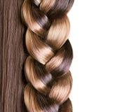 辫子发型 库存图片