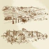 Виноградник, романтичный ландшафт Стоковые Изображения RF