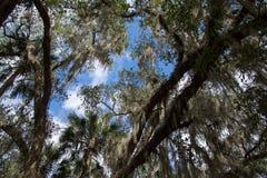 蓝色春天国家公园,佛罗里达,美国 免版税库存照片