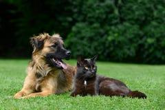 Собака и кошка Стоковое Изображение RF