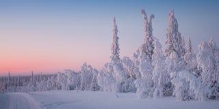 美好的冬天风景在拉普兰芬兰 免版税库存照片