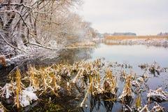 在沼泽的看法。草和水。 库存照片