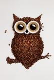 咖啡猫头鹰。 库存照片