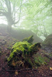 有一根死的树干的狂放的森林 免版税库存图片