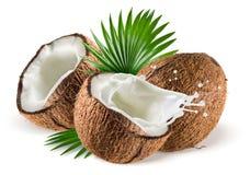 与牛奶飞溅和叶子的椰子在白色背景 免版税库存照片