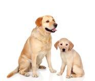 与小狗开会的成人狗 免版税库存图片