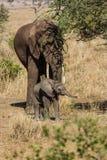 母亲和婴孩大象 免版税库存图片