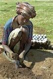 童工和重新造林,埃塞俄比亚 免版税图库摄影