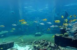 Подводная сцена Стоковые Фотографии RF