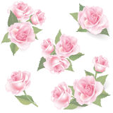 花在白色背景设置的罗斯。花卉装饰。 库存照片