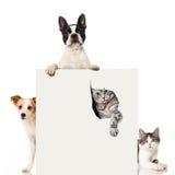 两条狗和两只猫 免版税库存照片