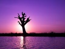 在河的偏僻的树 免版税库存照片