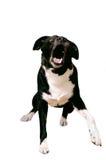 积极的狗 免版税库存照片