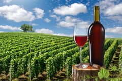 玻璃和瓶反对葡萄园的红葡萄酒环境美化 免版税图库摄影