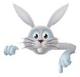 指向白色的复活节兔子下来 免版税库存照片