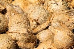 Кокосы шелушения Стоковые Изображения RF