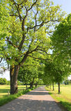 Εθνική οδός με τα φρέσκα βλαστάνοντας δέντρα στην άνοιξη Στοκ εικόνα με δικαίωμα ελεύθερης χρήσης
