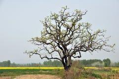 树 免版税图库摄影