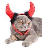恶魔猫 免版税库存图片