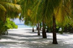在海滩的棕榈与白色沙子。夏令时在天堂地方在 库存照片
