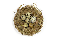 Φωλιά με τα αυγά των ορτυκιών στο λευκό Στοκ φωτογραφίες με δικαίωμα ελεύθερης χρήσης