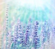 阳光照亮的草甸花 免版税库存照片