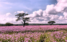ландшафт цветков Стоковое Фото