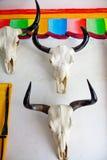 母牛头骨垂悬 免版税库存照片