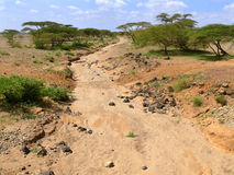 Сухое русло реки. Далекий лес. Африка, Кения. Стоковая Фотография