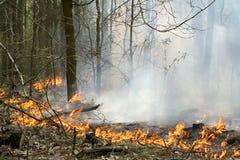 火森林 免版税库存图片