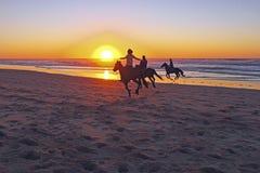 在海滩的马骑术 免版税库存图片