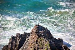 Западная береговая линия океана Португалии. Одичалые птицы на скале Стоковое Изображение