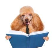 Собака читая книгу Стоковое Изображение RF