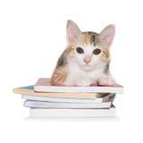 小猫坐堆书 免版税库存图片