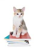 Котенок сидя с кучей книг Стоковые Изображения